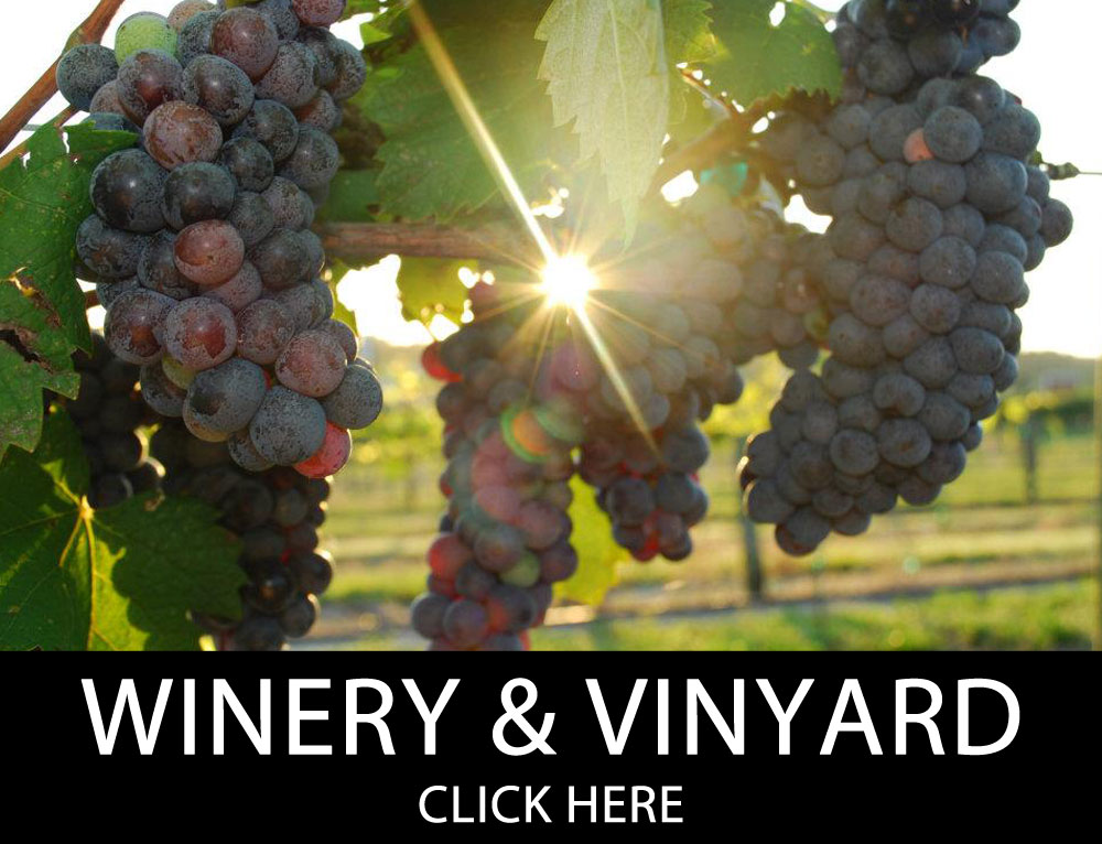 Winery & Vineyard Insurance